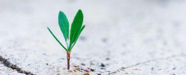 Rendity-Wachstum-Zuwachs
